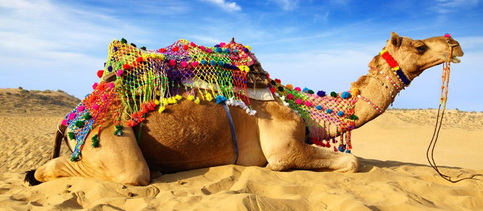Gearing up for the Camel festival...