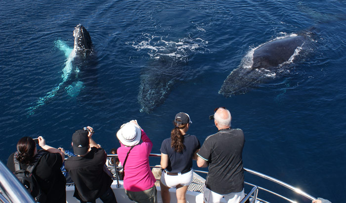 Watch the humpback whales pass the Gold Coast